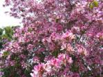 albero-orchid