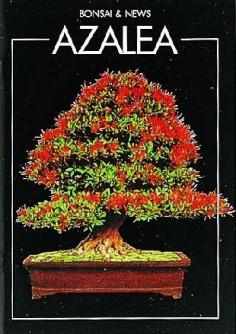azalea bonsai guida