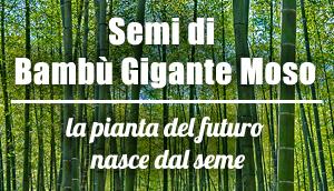 vendita online semi bambu