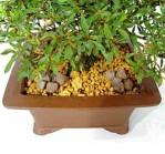 concime-bonsai-biogold