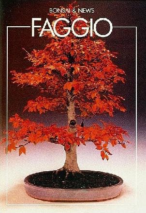 guida bonsai faggio