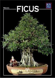 guida bonsai ficus
