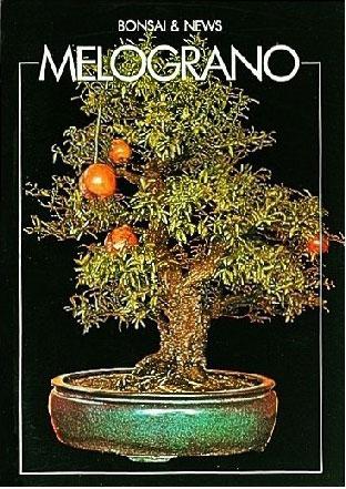 guida-bonsai-melograno