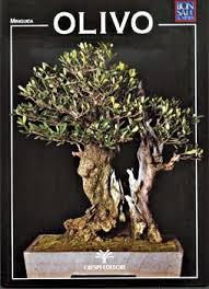 guida bonsai olivo