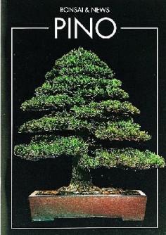 guida-bonsai-pino
