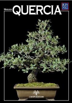 guida-bonsai-quercia