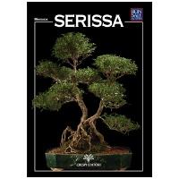 guida-bonsai-serissa