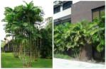 palma macarthur