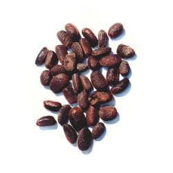 Semi di Ebano Asiatico (Diospyros melanoxylon)