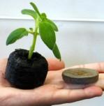 serra-bonsai-dischi per semina