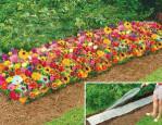 Semi di fiori per Tappeti Erbosi