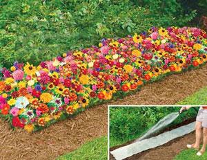 Negozio bonsai semi di fiori per tappeti erbosi for Semi di fiori