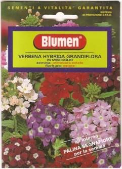 Semi di Verbena Hybrida Grandiflora